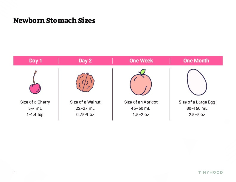 Newborn Stomach Sizes Preview Image